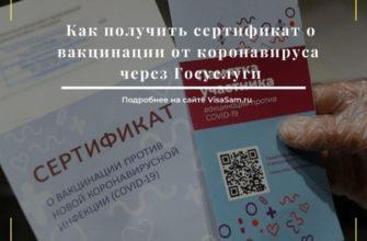 Сертификат о вакцинации: что делать, если не появился на госуслугах - инструкция - МК Новосибирск