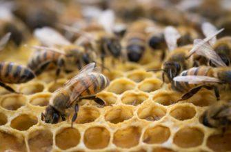 Сертификация меда и продуктов пчеловодства - цветочной пыльцы, медовых вин